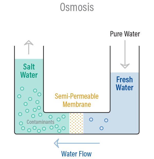 ออสโมซิส (Osmosis)